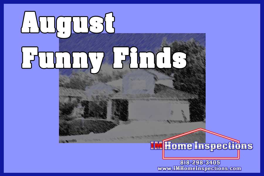 August Funny Finds
