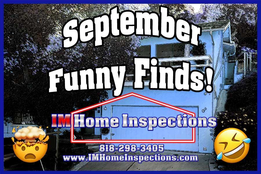 September Funny Finds